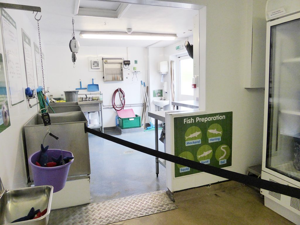 Fish preparation area in the seal hospital at the Cornish Seal Sanctuary