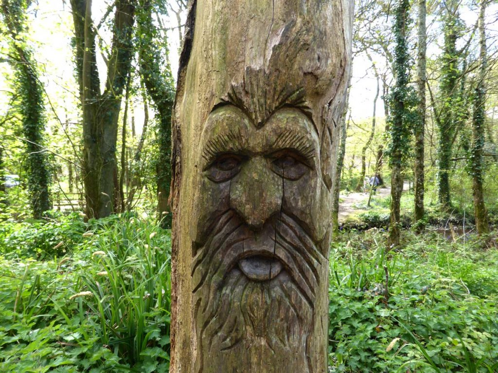 Wood carving of a face at tehidy Country Park, West Cornwall