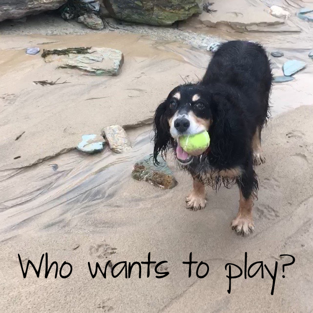 Watergate Bay is perfect for a game of fetch